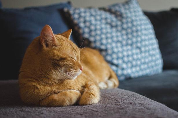 gatto sornione su divano