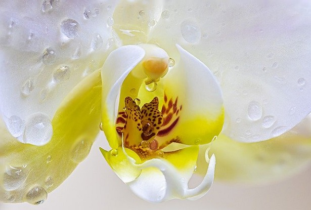 Piante eleganti da appartamento: l'orchidea