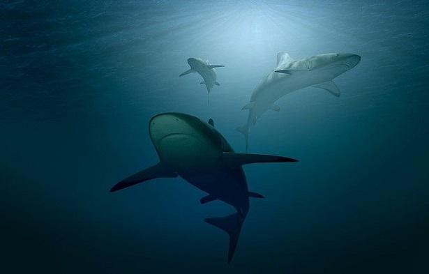 perché gli squali rischiano l'estinzione