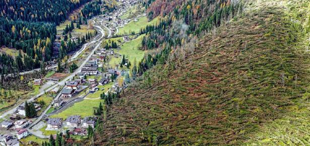 foresta distrutta