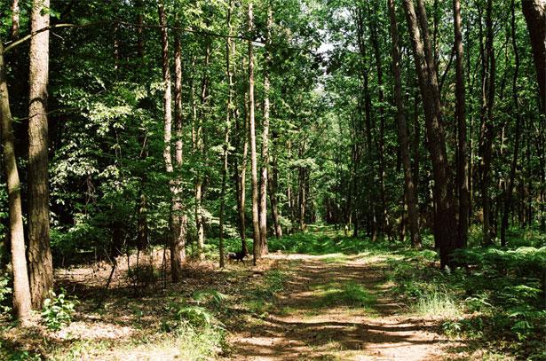 modellistica forestale